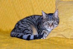 El dormitar - Uopini Foto de archivo libre de regalías