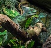 El dragón Fotografía de archivo
