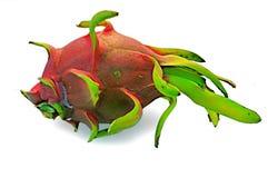El drag?n da fruto brit?nico del espino del undatus de Hylocercus Y Rose imagen de archivo libre de regalías