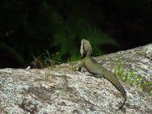 El dragón de agua mira y espera foto de archivo