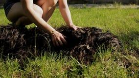 El dueño de los juegos del perro con ella en el césped verde Perro feliz que juega con la mujer metrajes