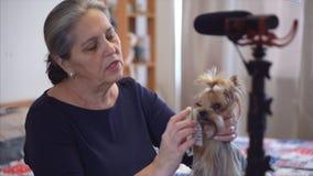 El dueño del animal doméstico del blogger de Grayhair está registrando el vídeo sobre animales domésticos almacen de video