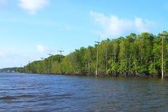 El ecosistema de los polos del mangle con corriente eléctrica foto de archivo