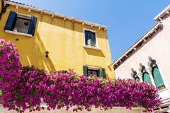 El edificio amarillo antiguo con la terraza con la petunia floreciente del rosa florece en Venezia Fotos de archivo libres de regalías