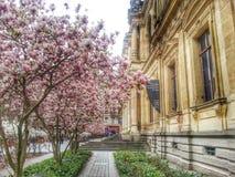 el edificio del cci en la primavera, ciudad vieja de Lyon, Francia Imagen de archivo libre de regalías