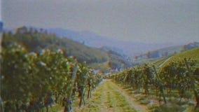 El efecto de la película de VHS del vintage sobre la inspección que camina del viñedo coloca almacen de metraje de vídeo