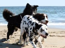 el ejecutarse de 3 perros Foto de archivo libre de regalías