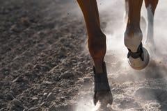 El ejecutarse de las piernas del caballo Fotografía de archivo libre de regalías