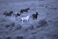 El ejecutarse de los caballos Foto de archivo