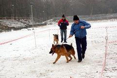 El ejecutarse de los perros Imagen de archivo libre de regalías