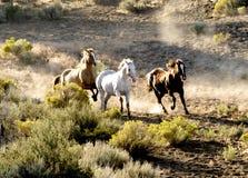 El ejecutarse de tres caballos salvaje imagen de archivo