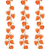El ejemplo de la acuarela del Physalis en el fondo blanco, vector el modelo inconsútil, textura del diseño del ornamento floral ilustración del vector