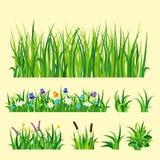 El ejemplo del vector de los elementos del diseño de la naturaleza de la hierba verde crece el fondo de la naturaleza de la agric
