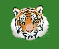 El ejemplo del vector del tigre libre illustration