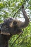 El elefante Imagen de archivo