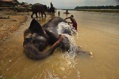 El elefante arroja a chorros el agua de la aclaración durante baño en el río Fotos de archivo libres de regalías