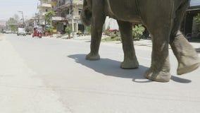 El elefante camina en la calle de la ciudad en Asia metrajes