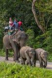 El elefante de la madre con dos bebés lleva al grupo de turistas indios durante safari en el parque nacional de Jaldapara, Assam, foto de archivo