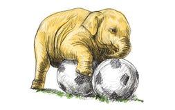 El elefante del bebé que juega a fútbol, el bosquejo y la carta blanca dibujan Fotos de archivo libres de regalías