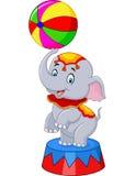 El elefante del circo con una bola rayada se coloca en un podio aislado Imagenes de archivo