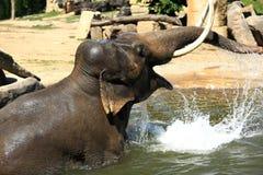 El elefante en un parque zoológico en Praga, República Checa Imagen de archivo libre de regalías