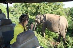 El elefante gris grande y la muchacha en la camisa amarilla Fotos de archivo