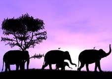 El elefante lleva la manera mientras que los otros siguen Fotografía de archivo libre de regalías