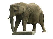 El elefante pudo Foto de archivo libre de regalías