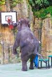 El elefante realiza clavada de golpe Imagenes de archivo