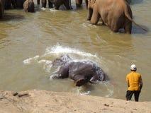 El elefante se está divirtiendo Imagenes de archivo