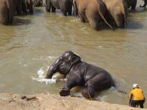 El elefante se está divirtiendo en un río Imágenes de archivo libres de regalías