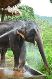 El elefante toma un baño Imagenes de archivo