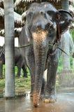 El elefante toma un baño Foto de archivo