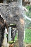 El elefante toma un baño Imágenes de archivo libres de regalías