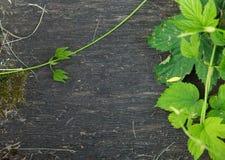El elemento envejecido natural ecológico rústico del fondo, gris oscuro y blanco viejo de la textura del piso con las hojas verde imagenes de archivo