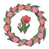 El elemento redondo decorativo con el tulipán rosado florece para el desi floral libre illustration