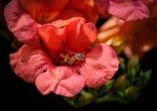 El emerger de la flor imagenes de archivo