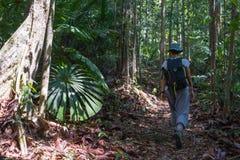 El emigrar en la selva tropical de Borneo Foto de archivo