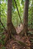 El emigrar en la selva tropical de Borneo Fotografía de archivo libre de regalías