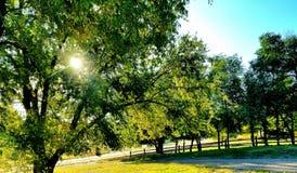 El enarbolar del sol lanzó las hojas de la caída Fotos de archivo libres de regalías