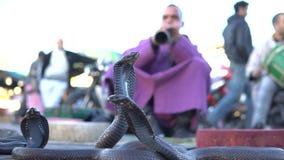 El encantar de la cobra Serpiente que es encantada por la música jugada por el hombre en la calle de Marrakesh, Marruecos metrajes