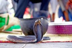 El encanto de la serpiente en Marrakesh Imagen de archivo