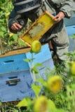 El encargado de la abeja que trabaja con la abeja encorcha en un campo del girasol Fotos de archivo libres de regalías