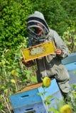 El encargado de la abeja que trabaja con la abeja encorcha en un campo del girasol Imagen de archivo