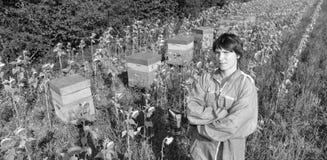 El encargado de la abeja que trabaja con la abeja encorcha en un campo del girasol Fotografía de archivo