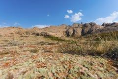 El enebro crece en piedras con el liquen y el musgo en el fondo de montañas fotos de archivo
