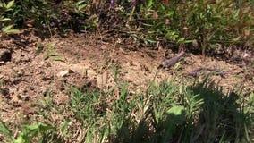 El enfoque hacia fuera tiró de hormigas frenéticas con los pájaros que gojeaban en el fondo metrajes