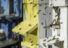 El enjambre de abejas vuela a la colmena Foto de archivo libre de regalías