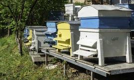 El enjambre de abejas vuela a la colmena Imagen de archivo