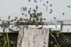 El enjambre de abejas vuela a la colmena Fotografía de archivo